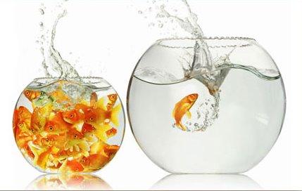 vielegoldfische.jpg